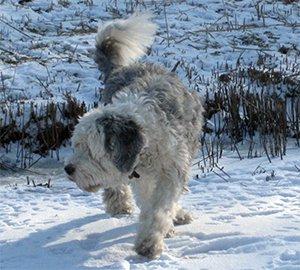 Brwyn's Snow Me the Bear