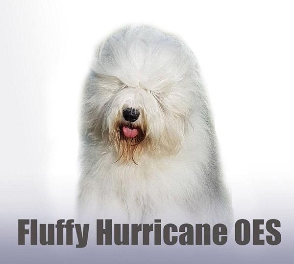 Fluffy Hurricane