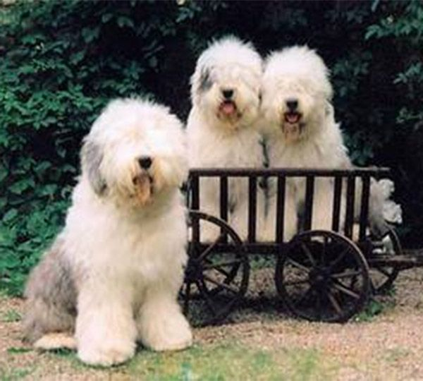 From Beautiful Highland