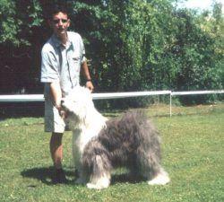 Piraza Dream Dog