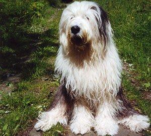 Wesley Lloyd Ruchiëng Beauty Dogs